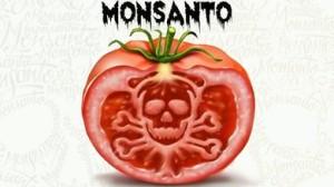tomate_monsanto