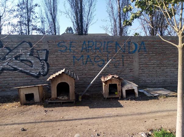 Carta abierta al Alcalde de la Comuna de Talagante