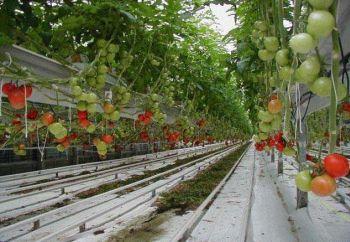 Se prepara una nueva crisis entre España y Marruecos: ahora, por tomates cultivados en territorio del Sahara Occidental