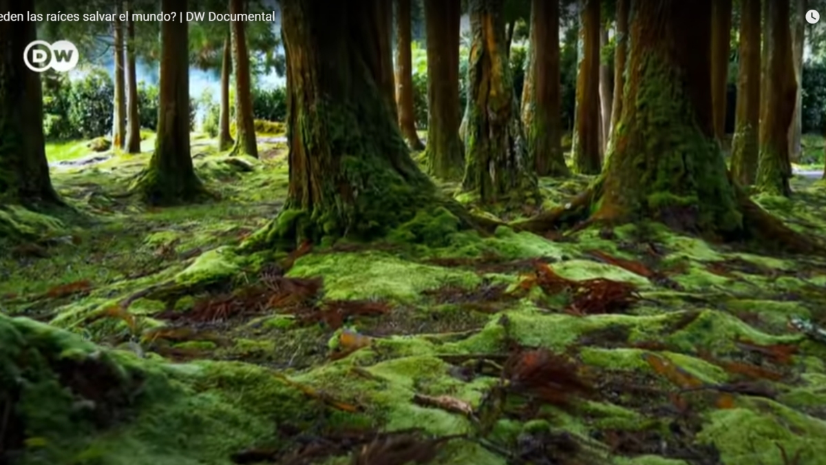 ¿Puede la parte invisible de las plantas, las raíces, ayudar en los grandes retos de la humanidad?