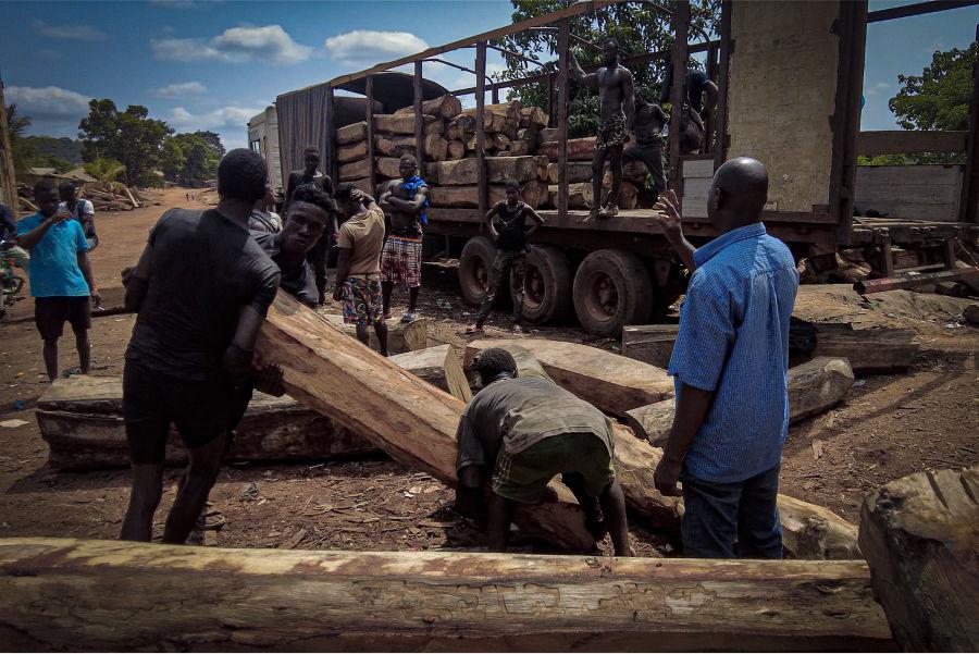 Imperialismo – La industria del mueble chino deja sin árboles a Sierra Leona